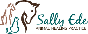The Animal Healing Practice | Sally Ede