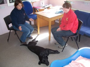 Sally in a healing consultation with Naomi and her labrador Beau